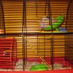 Charlie the Hamster