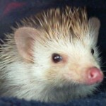 She's A Porcupine