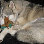 Rocco's Teddy