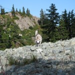 Dog Friendly Hiking: Mount Seymour