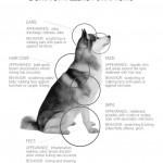 Huskies and Allergies