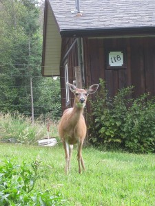 Rocco vs Deer