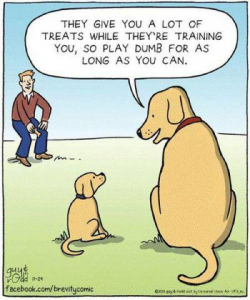 Training Thursday: Intermittent Reinforcement Schedule