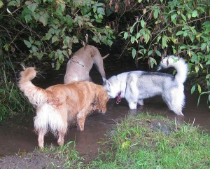 Wordless Wednesday: Fun in the Mud
