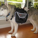 Training Thursday: Benefits of a Dog Backpack