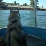 Ferry Ride Across False Creek