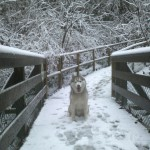 Snow Dog in the Snow Storm