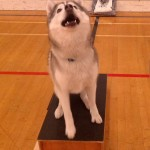 Training Thursday: Teach Your Dog to Sit Pretty
