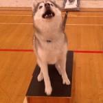 Training Thursday: Teach Your Dog to Sit Pretty