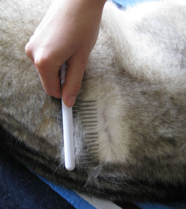 The comb lets me split his fur and inspect his skin and work out mats.