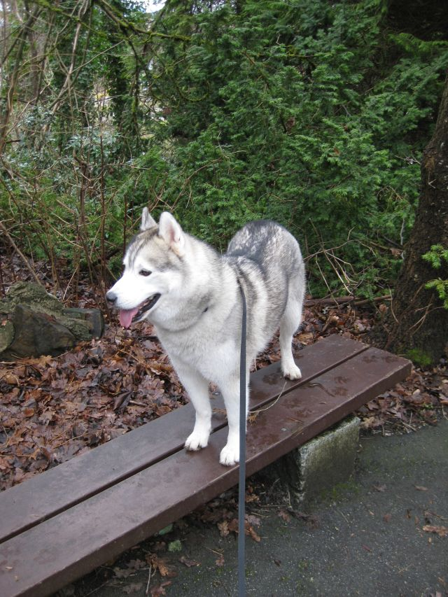 Walking along a narrow bench, once your dog reaches the end ask them to turn around - it will make them more aware of their hind quarters.