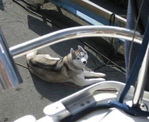 Wordless Wednesday: Dog Overboard!