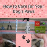 Pawdicure – How to Care for Your Dog's Paws