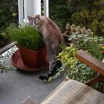 Bigger, Better Cat Grass