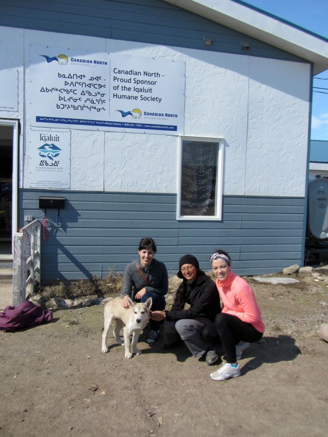 Volunteers clean, disinfect, build and organize kennels