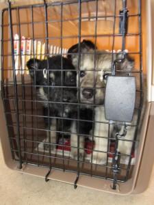 Iqaluit Humane Society 2007 Inc.
