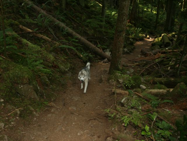 There are two parts to this trail: one is leash optional and the watershed area is an on-leash trail.