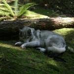 Dog Friendly Hiking: Whyte Lake