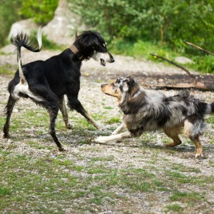 Things to Consider When Choosing a Daycare for Your Dog.