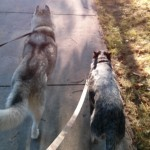 Wordless Wednesday: Evening Stroll With a Friend