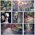 Hiking with Your Dog at Pacific Spirit Regional Park