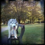 Wordless Wednesday: At the Park