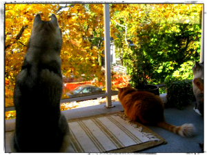 Wordless Wednesday: Keeping an Eye On Them Squirrels!