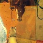 Wordless Wednesday: Meeting The Big Dog
