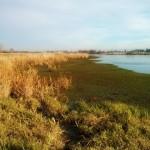 Dog Friendly Hiking: Serpentine Fen Nature Trail