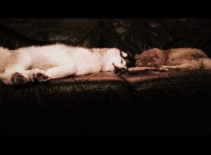 Wordless Wednesday: Couch Buddies