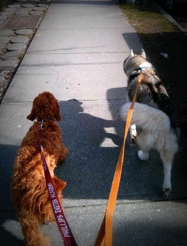 Young Darwin trying to imitate Rocco on their walk together.