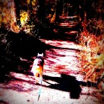 Wordless Wednesday: Dog and His Shadow