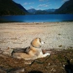 Dog Friendly Hiking In Golden Ears