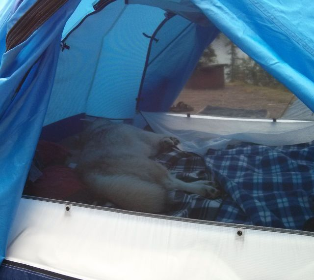 "After the first night sleeping in our tent, he quickly ditched his ""day tent"" and moved his daytime napping into a more comfortable location..."