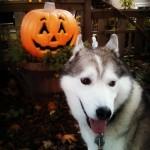 Wordless Wednesday: Happy Halloween!