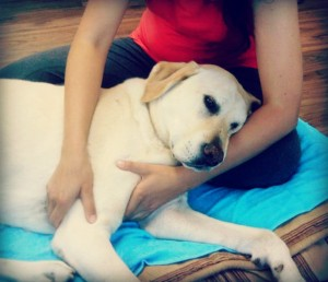 The Power of Touch – Benefits of Animal Massage