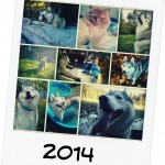 Wordless Wednesday: Goodbye 2014, Happy New Year!