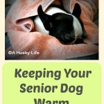 Keeping Your Senior Dog Warm