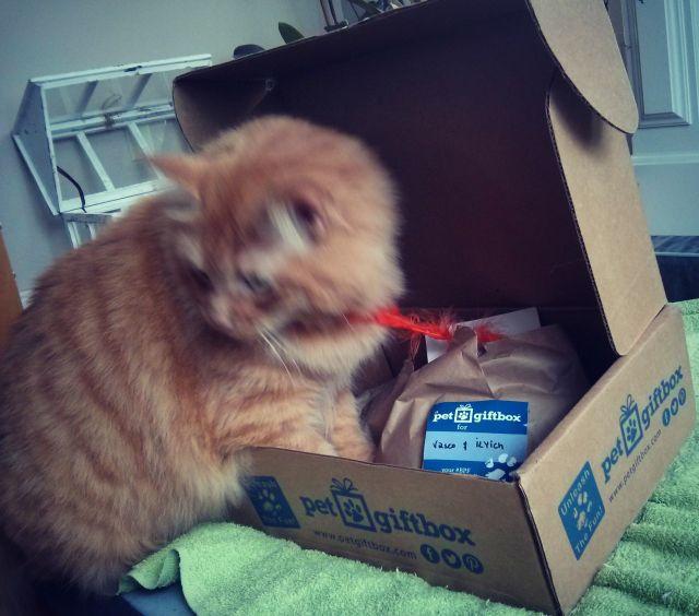 Pet Box 3