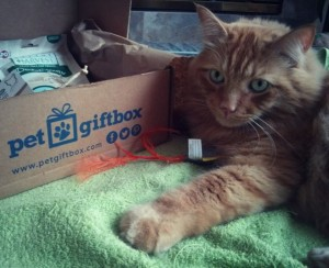 Pet Gift Box For Cats Review