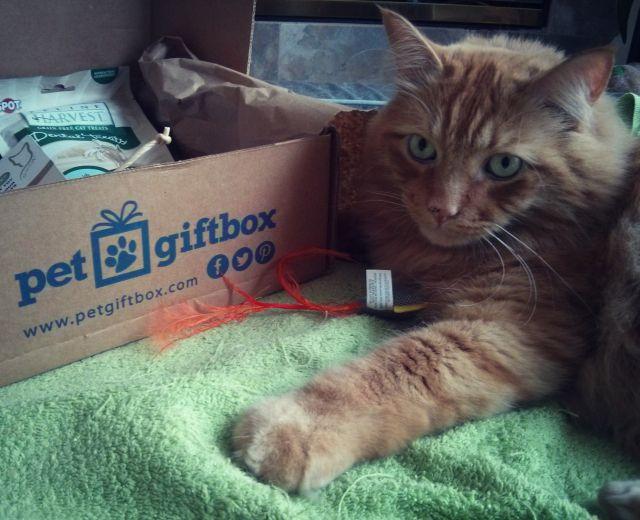 Pet Box 7
