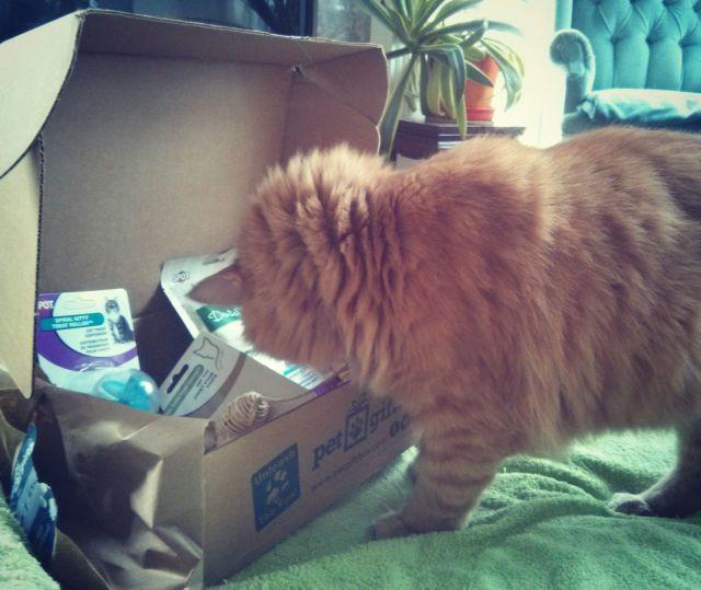 Pet box 5
