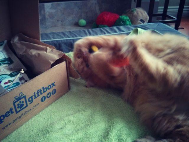 Pet box 6