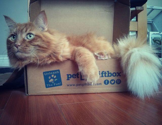 pet box 10