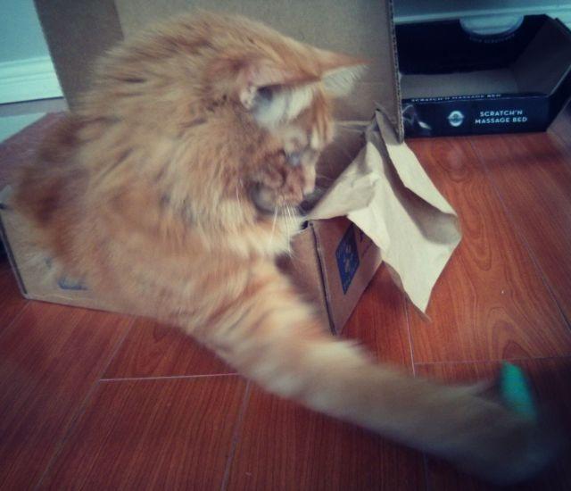 pet box 11