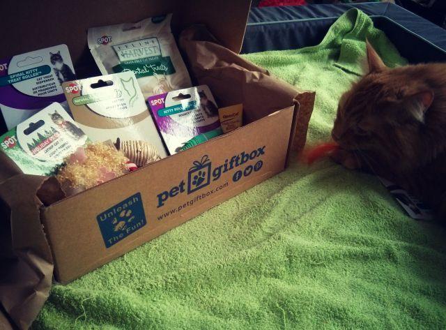 pet box 4
