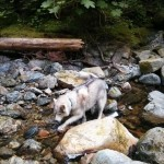 Dog Friendly Hiking: Brothers Creek Loop