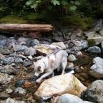 Dog Friendly Hiking: Brothers Creek Loop