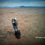 Wordless Wednesday: Low Tide Fun