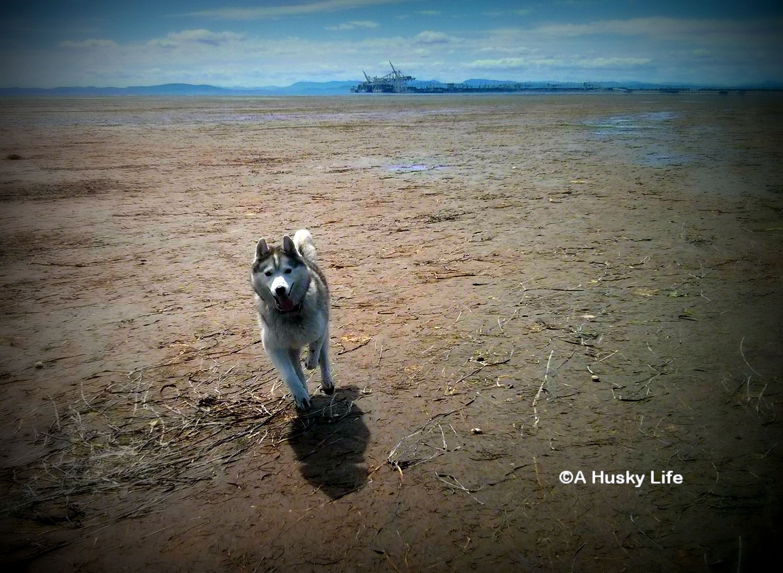 mud flatts